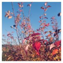 PicsArt_11-04-03.53.51.jpg